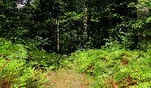 Randonnée Marche SAINT-JEAN-AUX-BOIS - en forêt de Compiègne_19_le Puits d'Antin_les Mares St-Louis_La Muette - Photo 119