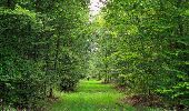 Randonnée Marche SAINT-JEAN-AUX-BOIS - en forêt de Compiègne_19_le Puits d'Antin_les Mares St-Louis_La Muette - Photo 106