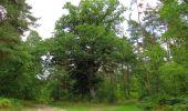 Randonnée Marche SAINT-JEAN-AUX-BOIS - en forêt de Compiègne_19_le Puits d'Antin_les Mares St-Louis_La Muette - Photo 63