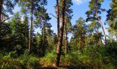 Randonnée Marche SAINT-JEAN-AUX-BOIS - en forêt de Compiègne_19_le Puits d'Antin_les Mares St-Louis_La Muette - Photo 147