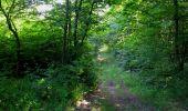 Randonnée Marche SAINT-JEAN-AUX-BOIS - en forêt de Compiègne_19_le Puits d'Antin_les Mares St-Louis_La Muette - Photo 184