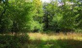 Randonnée Marche SAINT-JEAN-AUX-BOIS - en forêt de Compiègne_19_le Puits d'Antin_les Mares St-Louis_La Muette - Photo 120