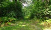 Randonnée Marche SAINT-JEAN-AUX-BOIS - en forêt de Compiègne_19_le Puits d'Antin_les Mares St-Louis_La Muette - Photo 115