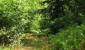 Randonnée Marche SAINT-JEAN-AUX-BOIS - en forêt de Compiègne_19_le Puits d'Antin_les Mares St-Louis_La Muette - Photo 121