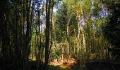 Randonnée Marche SAINT-JEAN-AUX-BOIS - en forêt de Compiègne_19_le Puits d'Antin_les Mares St-Louis_La Muette - Photo 186