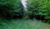 Randonnée Marche SAINT-JEAN-AUX-BOIS - en forêt de Compiègne_19_le Puits d'Antin_les Mares St-Louis_La Muette - Photo 178