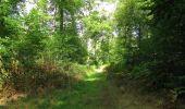 Randonnée Marche SAINT-JEAN-AUX-BOIS - en forêt de Compiègne_19_le Puits d'Antin_les Mares St-Louis_La Muette - Photo 137