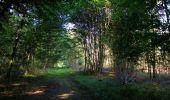 Randonnée Marche SAINT-JEAN-AUX-BOIS - en forêt de Compiègne_19_le Puits d'Antin_les Mares St-Louis_La Muette - Photo 187