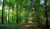 Randonnée Marche SAINT-JEAN-AUX-BOIS - en forêt de Compiègne_19_le Puits d'Antin_les Mares St-Louis_La Muette - Photo 201