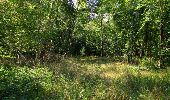 Randonnée Marche SAINT-JEAN-AUX-BOIS - en forêt de Compiègne_19_le Puits d'Antin_les Mares St-Louis_La Muette - Photo 170