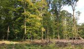 Trail Walk LOCQUIGNOL - Mormal Grande pâture 21 km - Photo 3