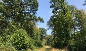 Trail Walk LOCQUIGNOL - Mormal Grande pâture 21 km - Photo 1