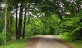 Trail Walk LONGPONT - en forêt de Retz_66_sur la Route Droite - Photo 5