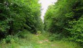 Trail Walk LONGPONT - en forêt de Retz_66_sur la Route Droite - Photo 3