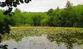 Trail Walk LONGPONT - en forêt de Retz_66_sur la Route Droite - Photo 6