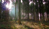 Randonnée Marche LONGPONT - en forêt de Retz_67_ballade (1) en toute saison - Photo 17