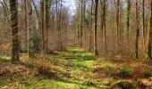 Randonnée Marche LONGPONT - en forêt de Retz_67_ballade (1) en toute saison - Photo 28