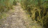 Trail Walk CENEVIERES - Cénevières Calvignac - Causse Lotois - Photo 3