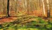 Randonnée Marche LONGPONT - en forêt de Retz_69_ballade (3) en toute saison - Photo 22