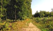 Randonnée Marche LONGPONT - en forêt de Retz_69_ballade (3) en toute saison - Photo 6