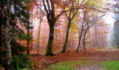 Randonnée Marche LONGPONT - en forêt de Retz_69_ballade (3) en toute saison - Photo 8