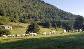Randonnée Marche SALVEZINES - La forêt d  en Malo depuis le Caunil (11) - Photo 9