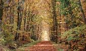 Randonnée Marche LIFFRE - Promenade en forêt de Rennes - Liffré - Photo 1