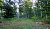 Randonnée Marche PIERREFONDS - en forêt de Compiègne_20_le Beaudon_bois de Damart_la Héronnière_bois du Bourgot - Photo 14