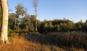Randonnée Marche PIERREFONDS - en forêt de Compiègne_20_le Beaudon_bois de Damart_la Héronnière_bois du Bourgot - Photo 9