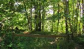 Randonnée Marche PIERREFONDS - en forêt de Compiègne_20_le Beaudon_bois de Damart_la Héronnière_bois du Bourgot - Photo 130