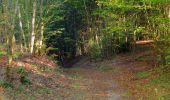 Randonnée Marche PIERREFONDS - en forêt de Compiègne_20_le Beaudon_bois de Damart_la Héronnière_bois du Bourgot - Photo 37