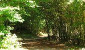 Randonnée Marche PIERREFONDS - en forêt de Compiègne_20_le Beaudon_bois de Damart_la Héronnière_bois du Bourgot - Photo 125
