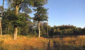 Randonnée Marche PIERREFONDS - en forêt de Compiègne_20_le Beaudon_bois de Damart_la Héronnière_bois du Bourgot - Photo 7