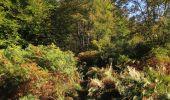 Randonnée Marche PIERREFONDS - en forêt de Compiègne_20_le Beaudon_bois de Damart_la Héronnière_bois du Bourgot - Photo 57