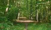 Randonnée Marche PIERREFONDS - en forêt de Compiègne_20_le Beaudon_bois de Damart_la Héronnière_bois du Bourgot - Photo 117