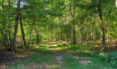 Randonnée Marche PIERREFONDS - en forêt de Compiègne_20_le Beaudon_bois de Damart_la Héronnière_bois du Bourgot - Photo 74