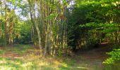 Randonnée Marche PIERREFONDS - en forêt de Compiègne_20_le Beaudon_bois de Damart_la Héronnière_bois du Bourgot - Photo 36