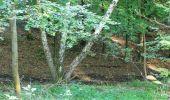 Randonnée Marche PIERREFONDS - en forêt de Compiègne_20_le Beaudon_bois de Damart_la Héronnière_bois du Bourgot - Photo 43