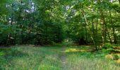 Randonnée Marche PIERREFONDS - en forêt de Compiègne_20_le Beaudon_bois de Damart_la Héronnière_bois du Bourgot - Photo 60