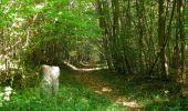 Randonnée Marche PIERREFONDS - en forêt de Compiègne_20_le Beaudon_bois de Damart_la Héronnière_bois du Bourgot - Photo 131