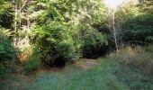 Randonnée Marche PIERREFONDS - en forêt de Compiègne_20_le Beaudon_bois de Damart_la Héronnière_bois du Bourgot - Photo 23