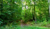 Randonnée Marche PIERREFONDS - en forêt de Compiègne_20_le Beaudon_bois de Damart_la Héronnière_bois du Bourgot - Photo 104
