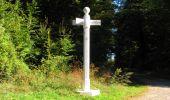 Randonnée Marche PIERREFONDS - en forêt de Compiègne_20_le Beaudon_bois de Damart_la Héronnière_bois du Bourgot - Photo 97