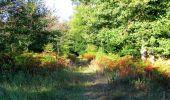 Randonnée Marche PIERREFONDS - en forêt de Compiègne_20_le Beaudon_bois de Damart_la Héronnière_bois du Bourgot - Photo 49
