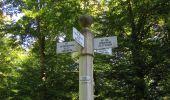 Randonnée Marche PIERREFONDS - en forêt de Compiègne_20_le Beaudon_bois de Damart_la Héronnière_bois du Bourgot - Photo 106