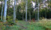 Randonnée Marche PIERREFONDS - en forêt de Compiègne_20_le Beaudon_bois de Damart_la Héronnière_bois du Bourgot - Photo 13