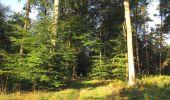 Randonnée Marche PIERREFONDS - en forêt de Compiègne_20_le Beaudon_bois de Damart_la Héronnière_bois du Bourgot - Photo 12