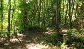 Randonnée Marche PIERREFONDS - en forêt de Compiègne_20_le Beaudon_bois de Damart_la Héronnière_bois du Bourgot - Photo 132