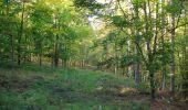 Randonnée Marche PIERREFONDS - en forêt de Compiègne_20_le Beaudon_bois de Damart_la Héronnière_bois du Bourgot - Photo 44