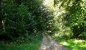 Randonnée Marche PIERREFONDS - en forêt de Compiègne_20_le Beaudon_bois de Damart_la Héronnière_bois du Bourgot - Photo 105